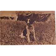 "US Infantry Mascot Postcard ~ ""Bullets Co. M. Dog"""