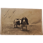 C1904 Antique French RPPC Postcard ~ Basset Hound Dog