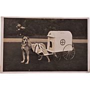 Antique WW1 RPPC Postcard ~ Red Cross Collection Dog