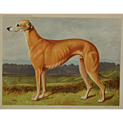 "C1890 Chromolithograph From The Illustrated Book of the Dog Cassell & Co. ~ Greyhound Named ""Lauderdale"""