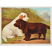 "C1890 Chromolithograph From The Illustrated Book of the Dog Cassell & Co. ~ Clumber Spaniel ""Lapis"" & Sussex Spaniel ""Romp"""