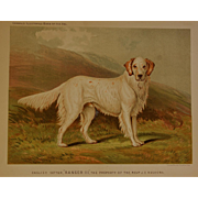 "C1890 Chromolithograph From The Illustrated Book of the Dog Cassell & Co. ~ English Setter ""Ranger III"""