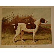 "C1890 Chromolithograph From The Illustrated Book of the Dog Cassell & Co. ~ Pointer Named ""Wagg"""