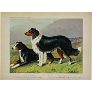 C1890 Chromolithograph From The Illustrated Book of the Dog Cassell & Co. ~  Smooth Coated & Rough Coated Sheep Dogs