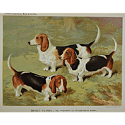 C1890 Chromolithograph From The Illustrated Book of the Dog Cassell & Co. ~ Bassett Hounds