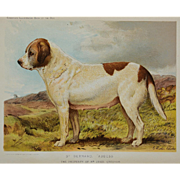 C1890 Chromolithograph From The Illustrated Book of the Dog Cassell & Co. ~ St Bernard