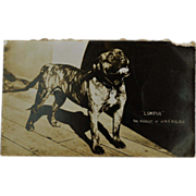 "WW1 Dog Mascot ""Lumpur"" Mascot Of H.M.S Malaya"