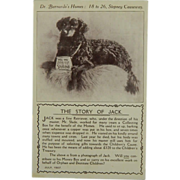 """""""The Story Of Jack"""" Collection Dog For Charity Postcard"""