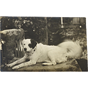 Antique RPPC Postcard ~ French Dog