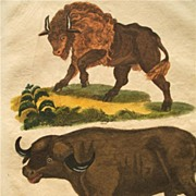 Buffon Antique Print H/C Engraving Buffalo Bison 1821