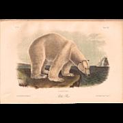 Rare Audubon Polar Bear Antique Print 1851 Plate 91 Octovo Quad Stone Lithograph