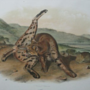 Audubon Quadruped Octovo Texas Lynx Antique PRINT Dated 1854