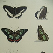 19th Century Dru Drury H/C Butterfly PL  XIV. Illustrations of Exotic Entomology by Dru Drury, London 1835-1842