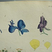 Thomas Martyn 18th Century Hand Colored Engravings Nectaries