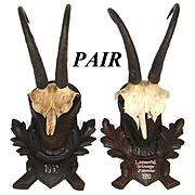Vintage Black Forest Hunt Trophy Mount PAIR, Carved Acorn & Oak Leaf Plaques, Chamois Horns