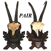 Vintage Black Forest Hunt Trophy Mount PAIR, Carved Acorn & Oak Leaf Plaques, Chamois Horns