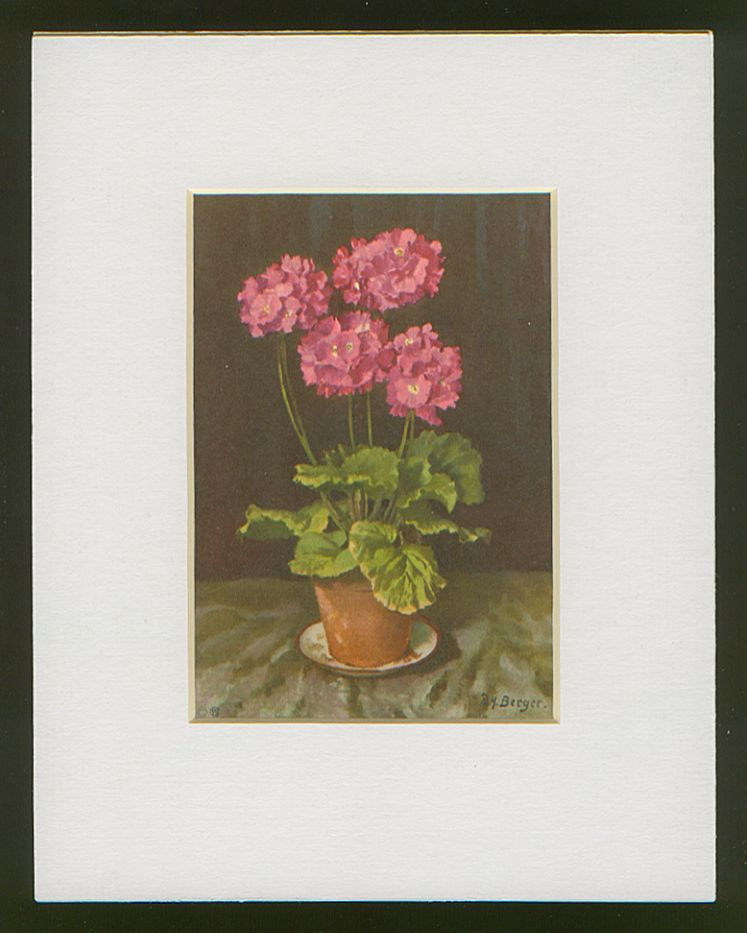Matted Stehli Floral Still Life Postcard/Print - Geraniums