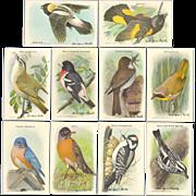 Arm & Hammer Advertising Cards - 1938 Bird Series