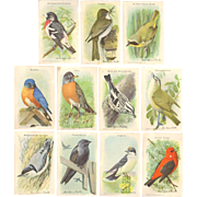 Arm & Hammer Advertising Cards - 1938 Bird Series - 11 Cards