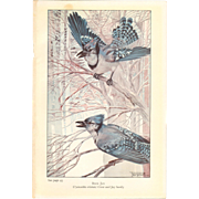 Nellie Pairpoint Color Print - Blue Jays