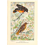 Nellie Pairpoint Color Print Pair - Baltimore and Orchard Orioles