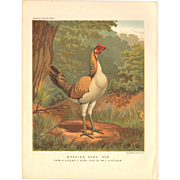 Cassell's Poultry Print - Wheaten Game Hen