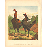 Cassell's Poultry Print - Brown-Breasted Red Game Pair