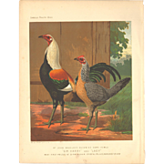 Cassell's Poultry Print - Duckwing Game Fowls
