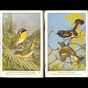Audubon Society Bird Series Postcards - Yellow-Throat and Redstart