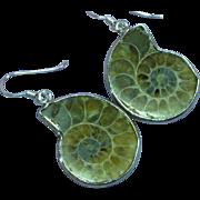 Ammonite Fossil in Sterling Silver Pierced Earrings