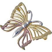 Pin Anne Kline Tricolor Butterfly