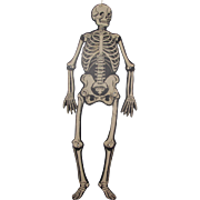 Halloween Jointed Skeleton Double Sided Flat Surface