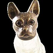 Wonderful Antique Figural Boston Terrier French Bulldog Pounce Pot Sander - a Treasure!