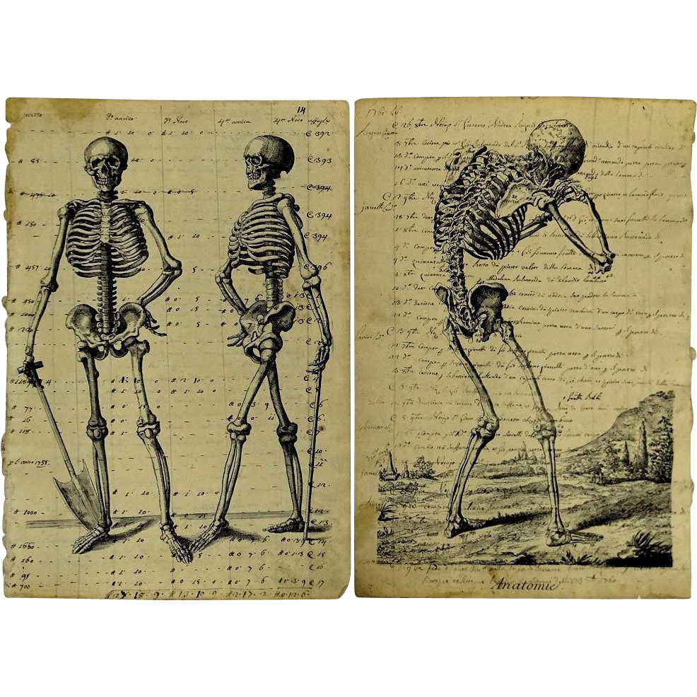 "Two Antique Italian Etchings printed on 18th C Italian manuscripts ""Anatomie""."