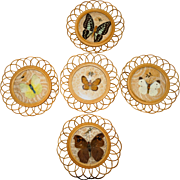Butterfly Coasters, FIVE That Are Beautiful To Display Or Use