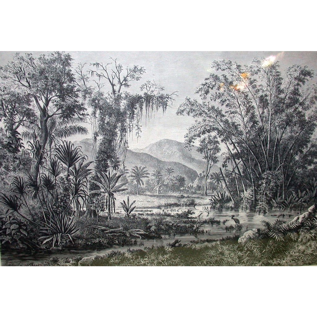 German Engraving - Jungle Landscape In Venezuela's San Cristobal