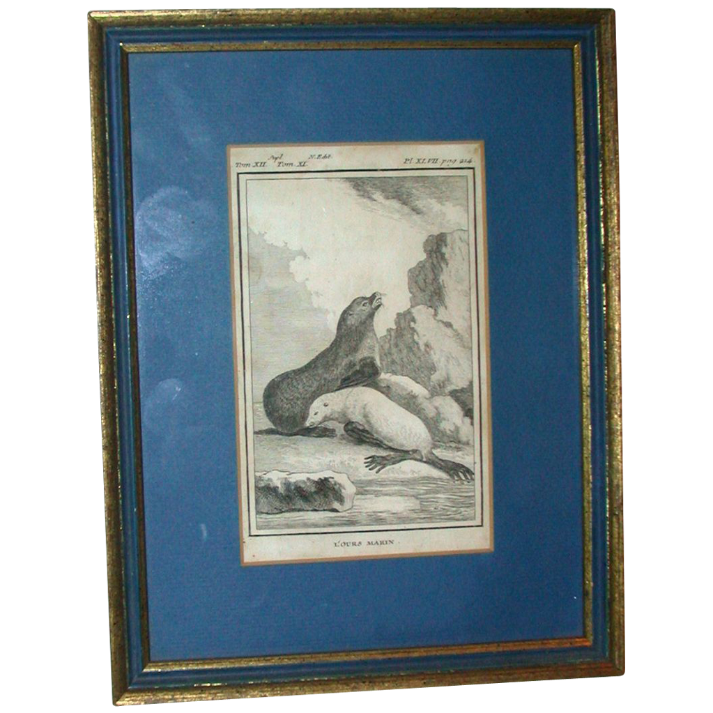 "Antique Framed Book Plate Engraving Of Seals (toned),   ""L'ours Marin"""