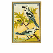 Large C.1940 Paper Label with 2 Blue Jays on an Oak Tree!