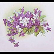 C.1908 Postcard with Paul De Longpre Graphics - Violets Galore!