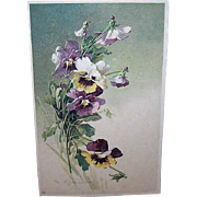 C.1960 CATHERINE KLEIN Postcard - Purple Pansies!