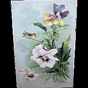 C.1960 Postcard by CATHERINE KLEIN - White Pansies!