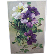 C.1960 CATHERINE KLEIN Postcard -Gorgeous Lavender, White & Purple Flowers!