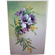 C.1960 CATHERINE KLEIN Postcard -Gorgeous Lavender & Purple Poppies!