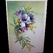 C.1960 CATHERINE KLEIN Postcard -Gorgeous Lavender & Purple Poppies!