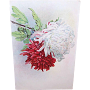 C.1900 Floral Postcard - Red & White Chrysanthemums - by Paul DeLongre aka Paul De Longpre!