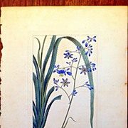 Antique French Botanical Print by Pancrace Bessa