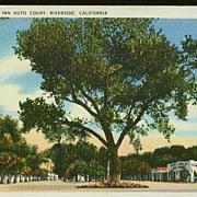 1930s Linen Postcard ~ Riverside Motor Inn California