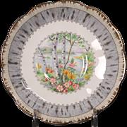 Beautiful Royal Alpert Bone China ''Silver Birch'' Saucer.
