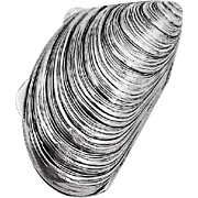 Figural Mussel Shell Pill Box Italian 800 Silver 1960