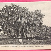 1908 Oak Tree On Bayou Teche Morgan City La. Postcard